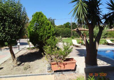 Rhodes Holidays Pine Tree A 3